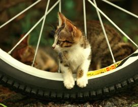A cute kitty between the spokes of a bicycle wheel