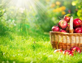 Red apples in a basket - HD wallpaper