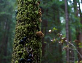Mushrooms and moss on the tree trunk