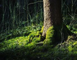 Tree trunk surrounded by green moss