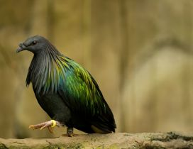 Black and green bird - Beautiful green wings