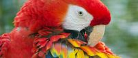 Gorgeous parrot with colorful wings