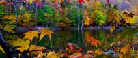 Beautiful autumn landscape in the colorful forest