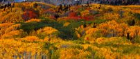 A colorful forest in mountain - Autumn time