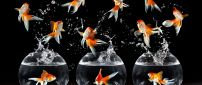 Many fish in the air and three aquariums