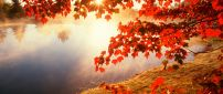 Good morning Autumn sunlight - HD wallpaper