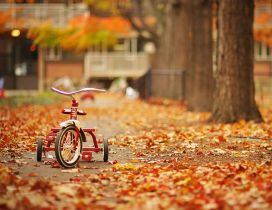 Special childhood - bike in the park on Autumn