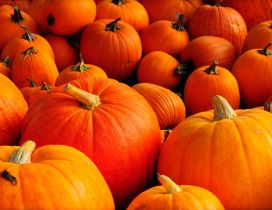 Orange pumpkins - Halloween is here