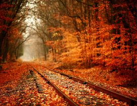 Train tracks covered with autumn leaves