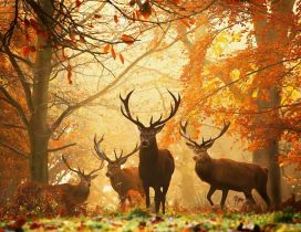 Beautiful deers in the forest - special autumn time