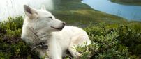 White dog sleeps in the green grass on a hill