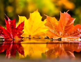 Three coloured autumn leaves in the mirror of water