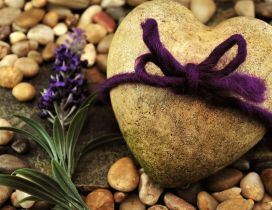 Beautiful perfume of lavender on the rocks