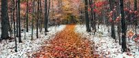 Path full with autumn leaves in the forest - first snow