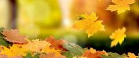 Beautiful carpet of autumn leaves - HD wallpaper