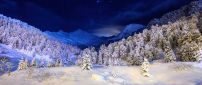 Wonderful trees full with snow - HD winter wallpaper