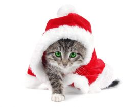 Sweet little kitty in Santa's costume