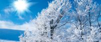 Sunny winter day on a cold season - HD wallpaper