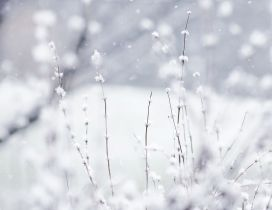 Frozen grass - HD white winter wallpaper