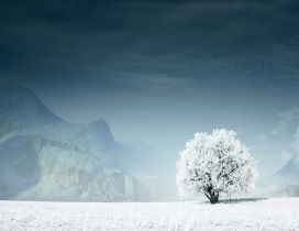 Beautiful white tree on the white field - mountain in back