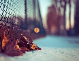 Autumn leaves in the snow - HD macro wallpaper