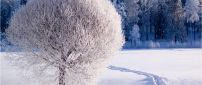 Beautiful white frozen tree - HD winter season