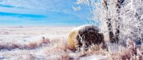 Winter landscape - beautiful white field