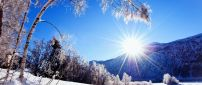 The trees like the winter sun - HD cold wallpaper