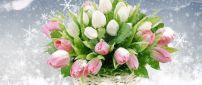 Beautiful bouquet of white and pink tulips