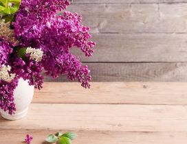 The most perfumed flowers in spring season - beautiful lilac