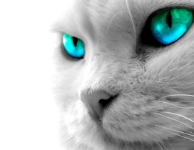 Beautiful cat with blue digital eye - HD wallpaper