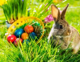 Easter time - fluffy rabbit in the green grass of spring