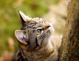 Climbing on a tree - sweet little tiger cat