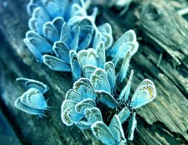 Frozen butterflies on a tree trunk - HD macro wallpaper
