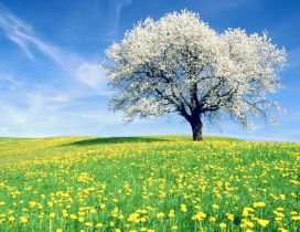 Field full with dandelion flowers and a blossom tree