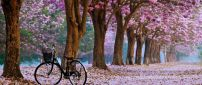 Walk in the park with the bike - beautiful spring time