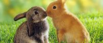 Two lovely rabbits - sweet animals in the grass