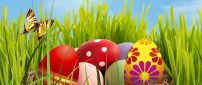 Colourful Easter Eggs in the grass - HD wallpaper