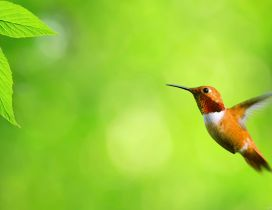 Little bird fly to the green leaves - HD wallpaper