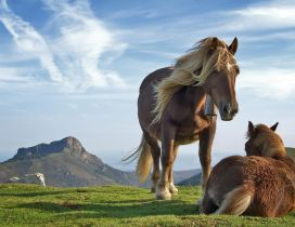 Wonderful horses in the middle of the nature