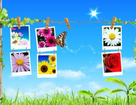 Photos with flowers in the spring season