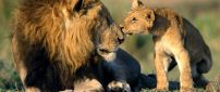Sweet kiss form your son - leon wild animal