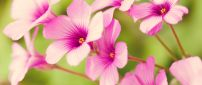 Pink spring flowers - beautiful season