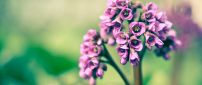 Beautiful little pink flowers - HD macro wallpaper