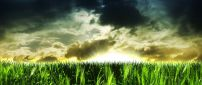 Abstract wallpaper - green field and big sun