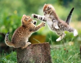 Fight between two sweet little cats - HD wallpaper