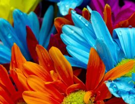 Intense colours on a beautiful flowers