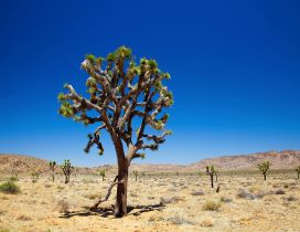 Trees in the dessert - hot summer season