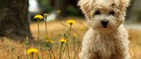 Brown little dog and some yellow flowers