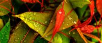 Water drops on the leaves in the morning - HD wallpaper
